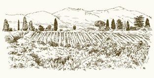 Wide view of vineyard. Vineyard landscape panorama. Hand drawn illustration stock illustration