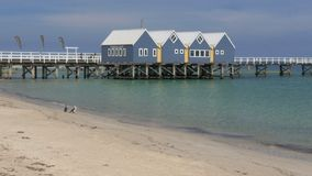 Busselton jetty and cormorants on beach. Wide view of western australia`s busselton jetty, the longest jetty in the southern hemisphere, and two cormorants on stock footage