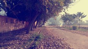 Wide Way. Way trees fog nature Royalty Free Stock Photo