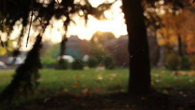 Wide Web at sunset stock footage