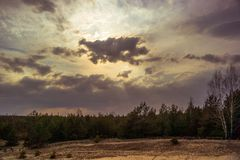 Widely field and cloud in dramatic. Pine forest stock photography