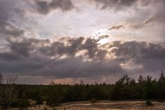 Widely field and cloud in dramatic. Pine forest royalty free stock image