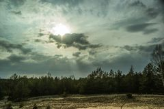 Widely field and cloud in dramatic. Pine forest stock images