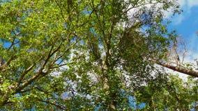 WIDEO chmury RUSZA SIĘ NAD drzewa zbiory wideo