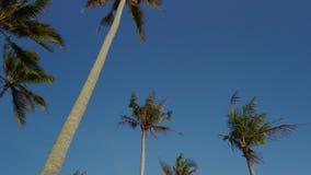 Wideo kokosowi drzewka palmowe kiwa z wiatrem zbiory