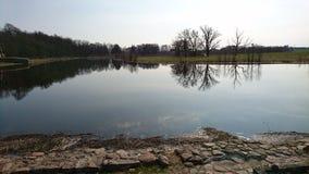 Widergespiegelte Baumgrenze auf dem See stockbild