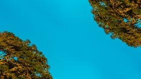 Widergespiegelte gekrümmte Bäume Stockbilder