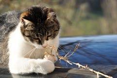 Widergespiegelte Katze Lizenzfreies Stockfoto