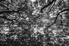 Widergespiegelter Baum auf Wasser stockfotografie