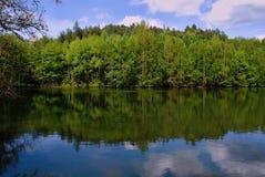 Widergespiegelter Wald Stockbild