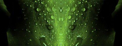 Widergespiegeltes Blatt mit Wassertropfen lizenzfreie stockfotos