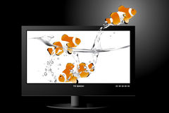 Widescreen lcd monitor. Frontal view of widescreen lcd monitor, and clown fish jumping out of the screen stock illustration
