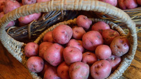 Widescreen size of basket with small red new potatoes Royalty Free Stock Photo