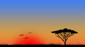 Widescreen sunset tree landscape Stock Photos
