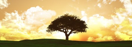 Widescreen sunset tree landscape Royalty Free Stock Photo