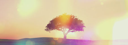 Widescreen sunset tree landscape with retro effect Royalty Free Stock Photo