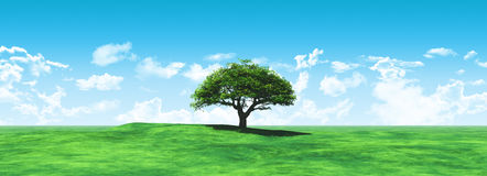 Widescreen tree landscape. 3D render of a widescreen tree landscape royalty free illustration