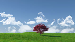Widescreen tree landscape. 3D render of a maple tree landscape Stock Images