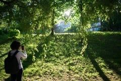 Wideshot de la mujer que toma un snpashot de la puesta del sol en parque foto de archivo libre de regalías