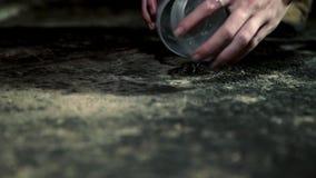 Wideshot de la pequeña araña que es cogida en envase por humano almacen de video