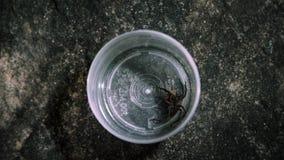 Wideshotsatellietbeeld over spin het voeden op veenmol stock video