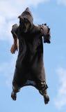 Widmowy Latający potwór obrazy royalty free