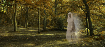 Widmowy postaci szybownictwo przez jesień lasu obrazy royalty free