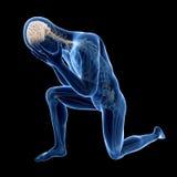 Widoczna anatomia Zdjęcie Royalty Free