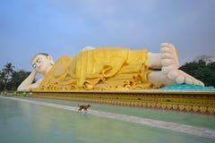 Widoczny wielki Mya Tha Lyaung Opiera Buddha z przybłąkanego psa omijaniem obok Zdjęcia Royalty Free