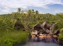 Widok ładny tropikalny tło z koksem Zdjęcia Stock