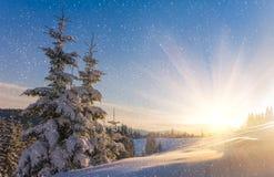 Widok śnieżyści conifer drzewa i śnieżni płatki przy wschodem słońca Wesoło Christmas lub nowego roku tło Zdjęcie Stock