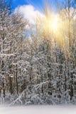Widok śnieżyści conifer drzewa i śnieżni płatki przy wschodem słońca Wesoło Christmas lub nowego roku tło Fotografia Stock