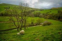 Widok angielska wieś w wiośnie Zdjęcia Royalty Free