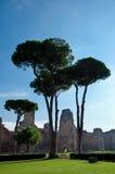 Widok Caracalla skacze z obszarem trawiasty i drzewami pionowo przy R Obraz Royalty Free