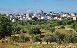 Widok Casalini, wieś z drzewami oliwnymi Fotografia Royalty Free