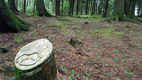 Widok chwytający przy Aitken drewnem zdjęcia stock