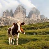 Widok Cime Zinnen lub Drei krowy i góry Fotografia Royalty Free