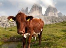 Widok Cime Zinnen lub Drei krowy i góry Zdjęcie Royalty Free