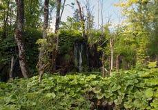 widok Croatia jezior park narodowy plitvice widok Zdjęcie Royalty Free