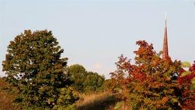 Widok czerwień i zieleń opuszcza od różnych drzew zbiory