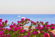 Widok Czerwony morze południowe menchie i kwitnie przy kurortem sharm el sheikh w Egipt Fotografia Royalty Free
