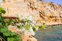 Widok Czerwony morze południowe menchie i kwitnie przy kurortem sharm el sheikh w Egipt Zdjęcia Royalty Free