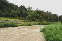 Widok dżungla i Halna rzeka w Malezja lesie tropikalnym z Chmurnym Burzowym niebem szczytów i Małej Bujny dżungli Zielona roślinn obrazy royalty free