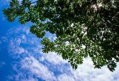 Widok do nieba pod drzewem Obrazy Royalty Free