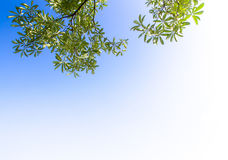 Widok do nieba pod drzewem Obraz Stock