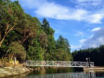 Widok dok prowadzi brzeg piękna wyspa Arbutus drzewa pełno mała rampa i zdjęcie royalty free