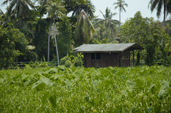 Widok dom w wsi Obrazy Royalty Free