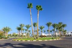Widok droga i drzewka palmowe blisko hoteli/lów Fotografia Stock