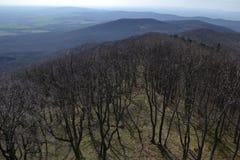Widok drzewa, góry i wzgórza, Obraz Stock