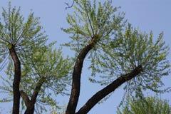 Widok drzewa w parku fotografia royalty free
